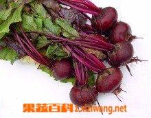 果蔬百科红菜头怎么吃